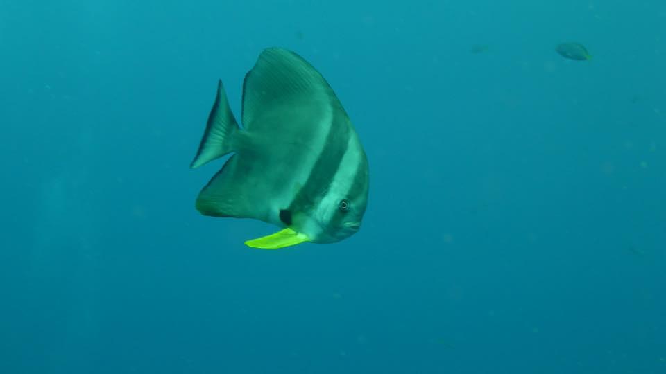 unterwasserwelt-nangyuan